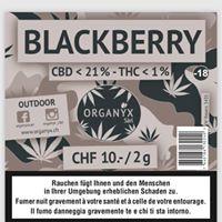 Blackberrycbd_organyxcbd